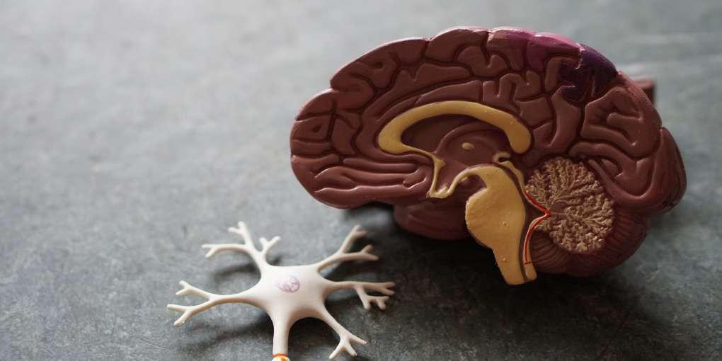 brain health omega 369